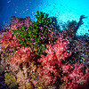A colorful and healthy coral reef.