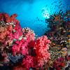 @Beqa Lagoon, Fiji