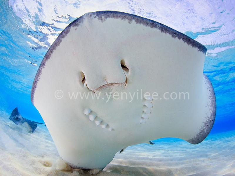 SMILE! (笑顏) @ Grand Cayman (開曼群島)