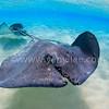 2018 美國 Beneath The Sea 潛水展 環境保育組 銅牌<br /> Third Prize Winner, Conservation Category, 2018 Beneath The Sea Underwater Photo Competition (USA).