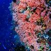 Pink Kingdom (粉紅國度) @ Banka Island, Indonesia (印尼 邦卡島)