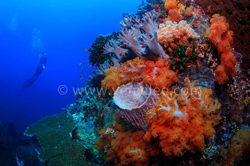 @ Komodo, Indonesia