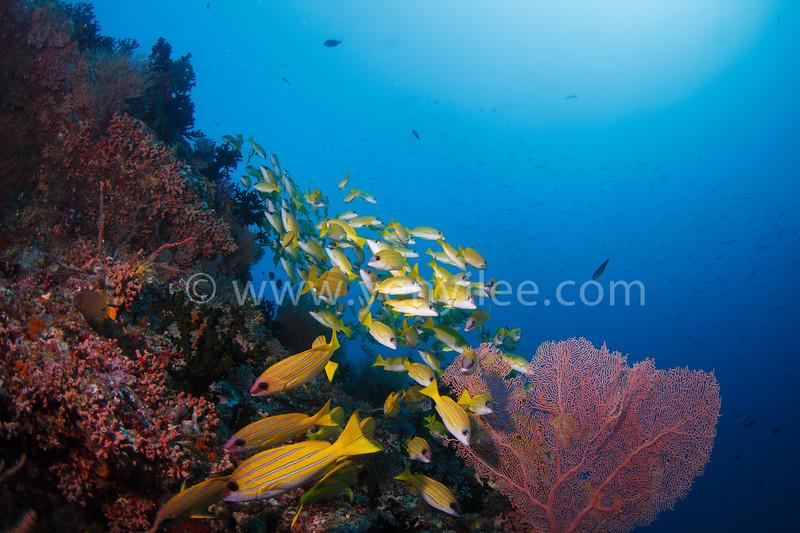 @ Kuda Rah Thila, Maldives