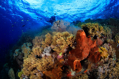 @ Banda Sea, Indonesia