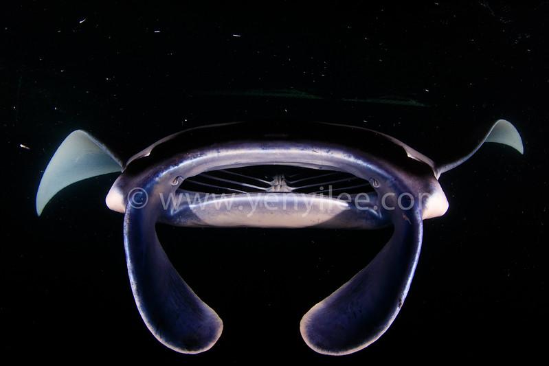 Spaceship (太空船) @ German Channel, Palau (帛琉 德國水道)