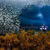 Sardine Reef @ Bohol, Philippines.