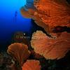 City of Seafan (海扇之城) @ Pulau Weh, Indonesia (印尼 韋島)