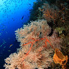 Underwater Colors @ Raja Ampat