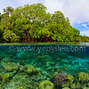 Under The Surface -- Mangrove (水面之下 -- 紅樹林) @ Raja Ampat, Indonesia (印尼 四王群島)