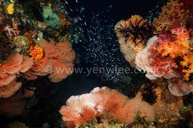 Night of the Sea (夜之海) @ Raja Ampat, Indonesia (印尼 四王群島)