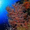 Underwater Paradise @ Raja Ampat
