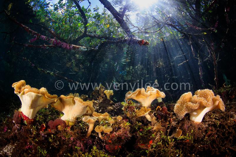 Mushroom Forest (蘑菇森林) @ Raja Ampat, Indonesia (印尼 四王群島)