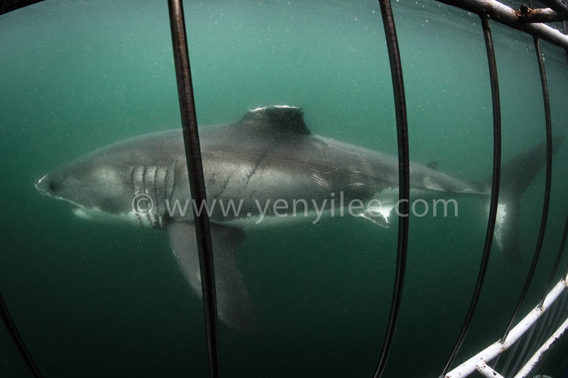 Survivor @ Mossel Bay, South Africa
