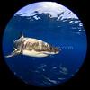 Shark Planet @  Neptune Island, South Australia