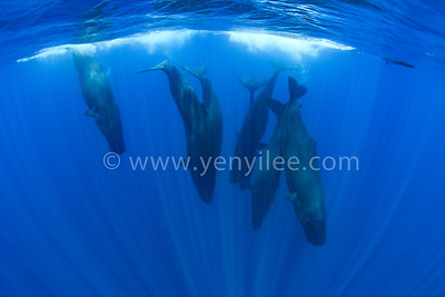 Sri Lanka - Kingdom of Whales 斯里蘭卡 - 鯨魚國度