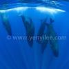 Whale Dance (鯨魚之舞) @ Trincomalee, Sri Lanka (斯里蘭卡 亭可馬里)