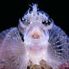 Underwater Macro :