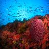 多采多姿的野柳水下世界