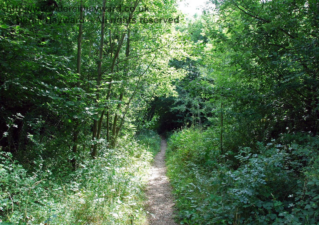 Looking back west towards the tunnel of undergrowth. 27.07.2008