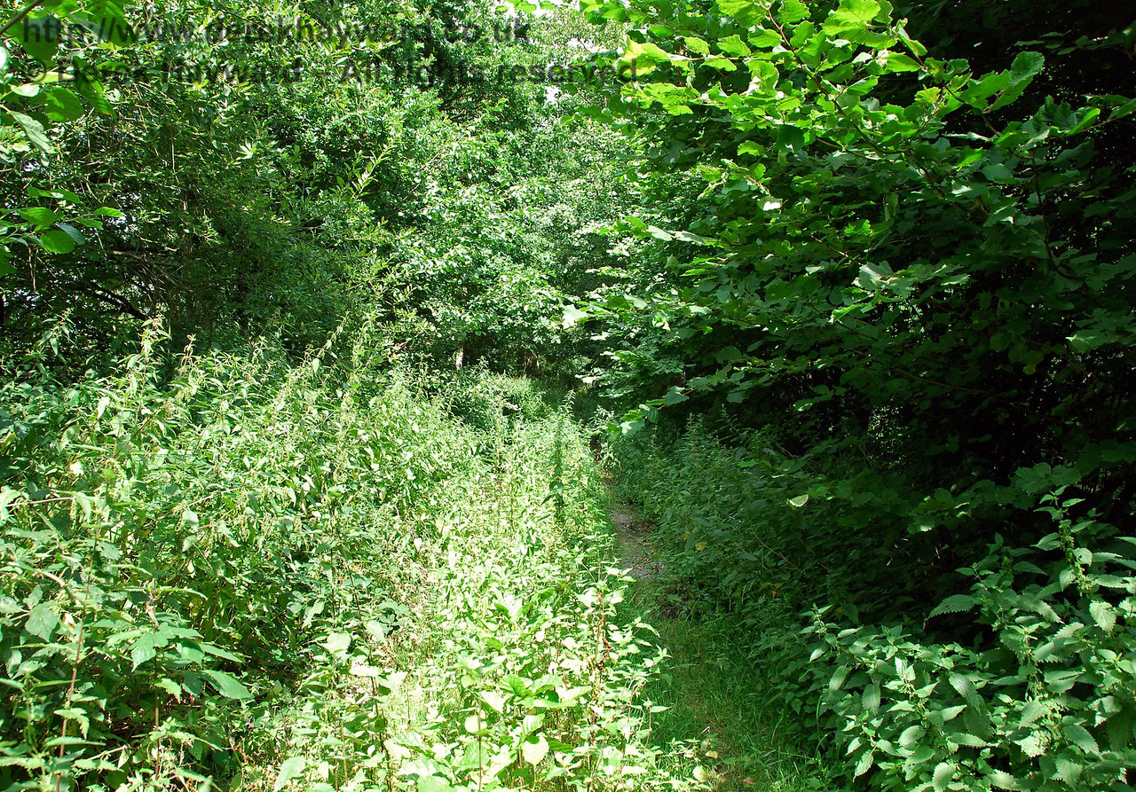 After a short distance the route east becomes blocked by dense undergrowth and is impassable.  The overgrown route leads to a point where the newly constructed A22/A26 road crosses the track bed.  All trace of the railway has been erased in the immediate vicinity of the road and stopping on this busy major road to try to observe the route is not recommended. 27.07.2008