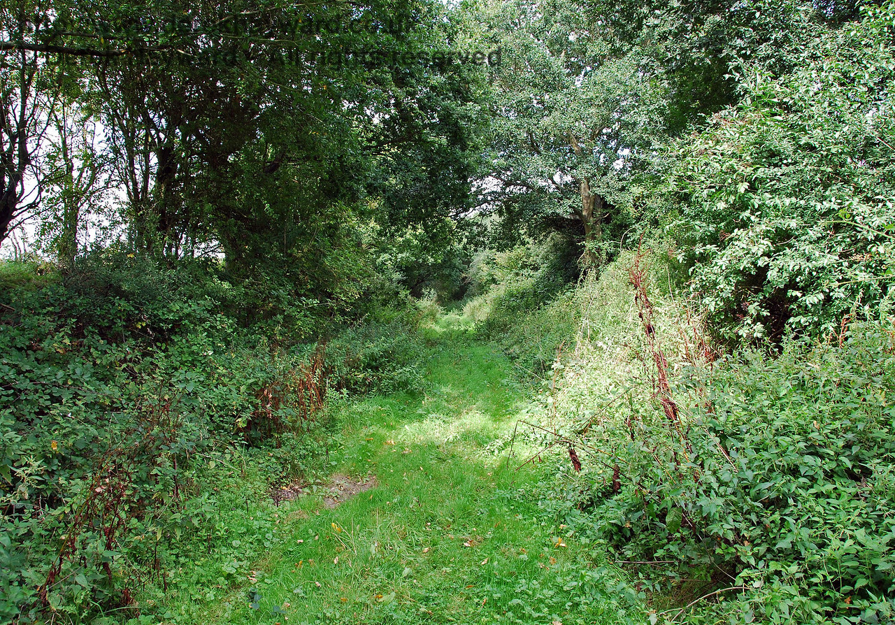 A little further north and the track leads through a very shallow cutting.  This view looks north. 02.09.2007