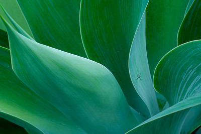 41 Green shapes - 74x103cm Cicléprint with black frame, passepartout and museum glass