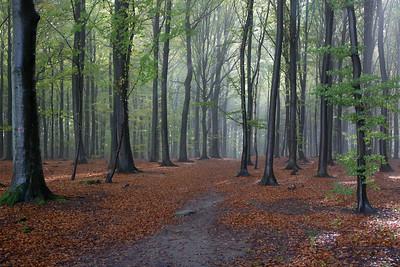 39 Wet forrest trees - 85x115cm cicléprint black frame, passepartout  and museum glass