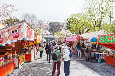Festival at Cherry Blossom in Ueno Park