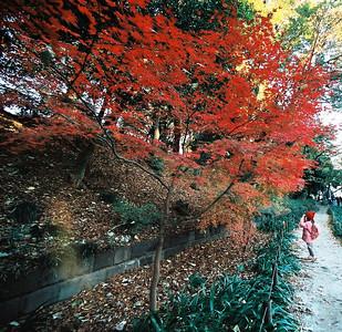Ueno & Akihabara