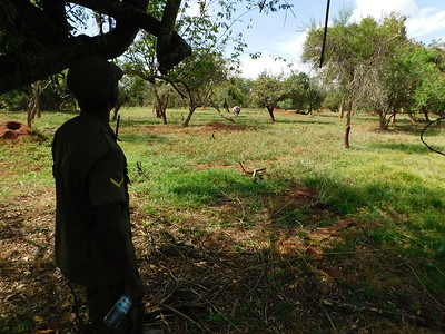 Rhino tracking on foot / Ziwa Rhino Sanctuary