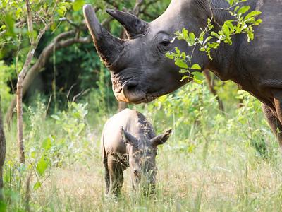 Mother Nandi and baby Uhuru.