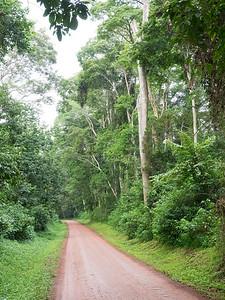 Bugungiro (Budongo) Forest