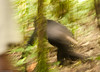 My first try at capturing a fast chimpanzee in very low light !   8-)