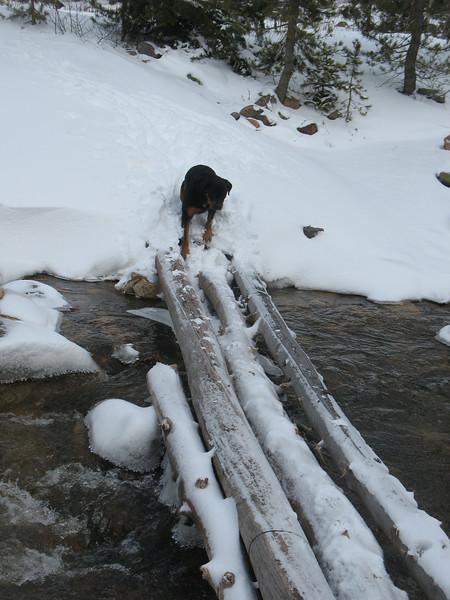 Dog bridge