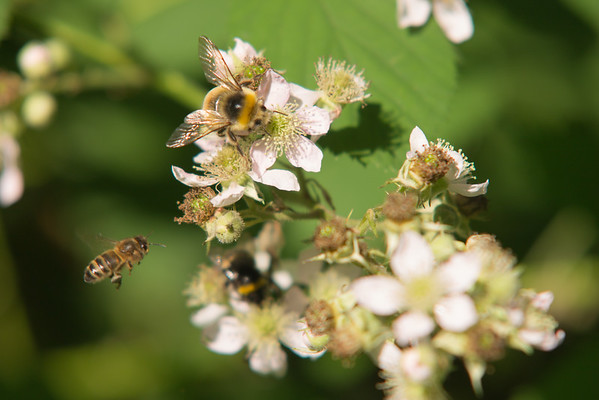 Busy bees at the Wageningen-'mountain'