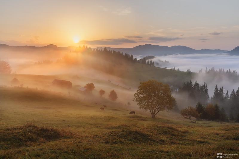 Rural Morning | Сільський ранок