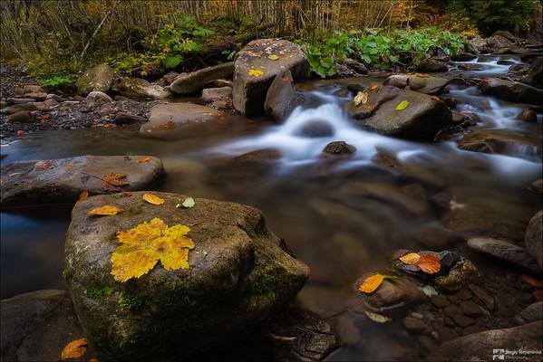 Autumn on the Stream | Осень на ручье