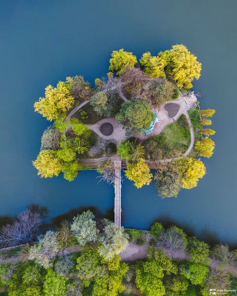 The Tree   Дерево