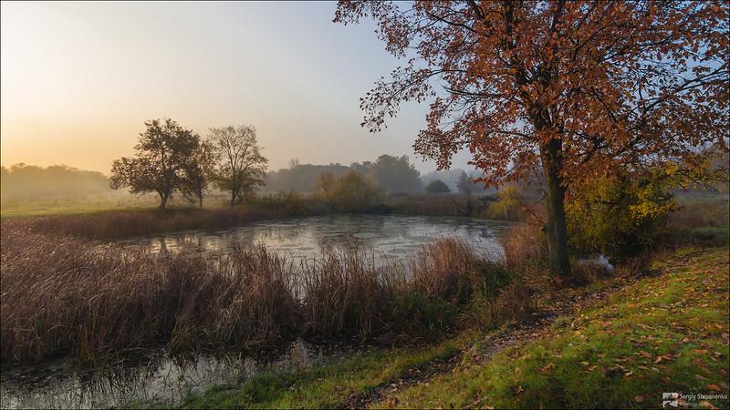 The Swamp | Болотце