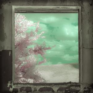 Infrared Landscape #211