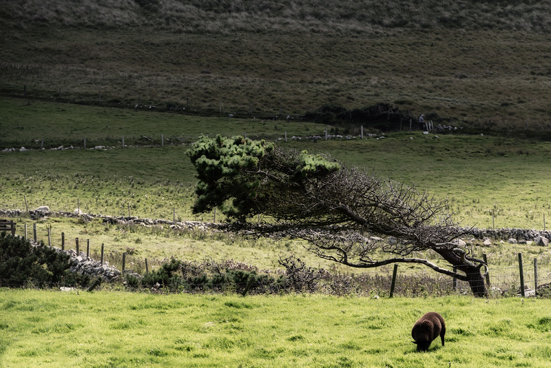 Donegal tree form
