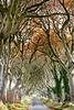 Dark hedges, Armoy