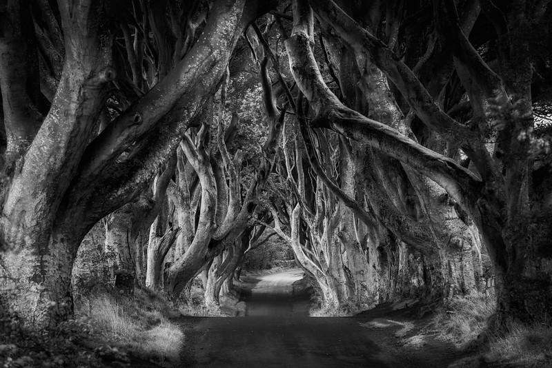 Dark hedges, Bregagh Rd, Antrim