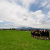 20110528_FHI_USAU_Sat_R3_192
