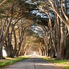 Cyprus Tree Tunnel - Ultra High Res