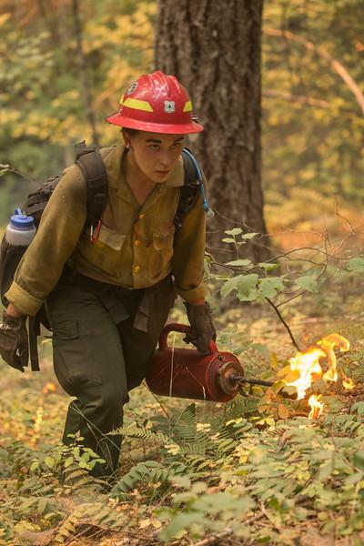 Umpqua NF Fires, 2017, Oregon: Happy Dog Fire