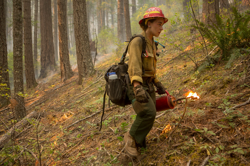 Umpqua NF Fires, 2017, Oregon: Happy Dog Fire