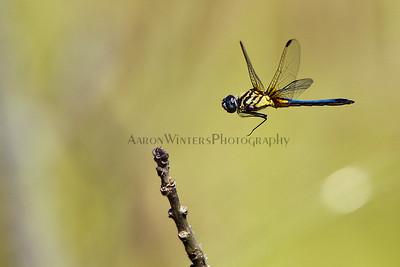 A Flying Dragon 2012