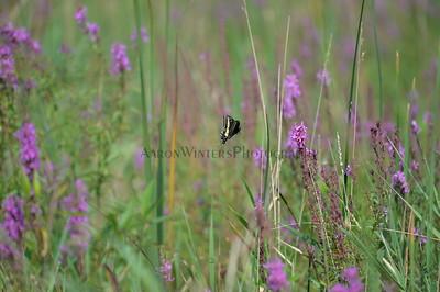 Butterflying 2013