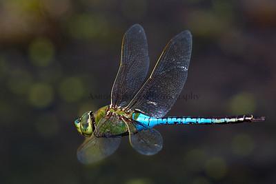 On Dragon Wings 2012